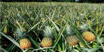 3.5 Hectares Agricultural Farmland, Katse Farmland Layout, Gwagwalada, Abuja, Commercial Land for Sale