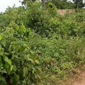 Well Located 100 By 300 Land for Sale Along The Road at Arougba Gra, Off Airport Road Benin City., Arougba Gra, Benin, Oredo, Edo, Mixed-use Land for Sale