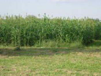 1 Plots of Land, Amoyo, Ifelodun, Kwara, Land for Sale