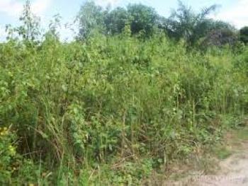 100 Plots of Land, Amoyo Maigida Estate, Ifelodun, Kwara, Land for Sale