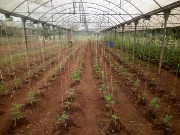 40 Hectares Farm Land with Green Houses, Sagamu, Ogun, Commercial Property for Sale