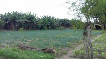 40 Acres of Land, Along Lasu Ojo Expressway, Ojo, Lagos, Industrial Land for Sale