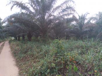 a Five Hectare Palm Plantation (high Yield Quality), Umuokanne Ohaji, Ohaji/egbema, Imo, Commercial Land for Sale