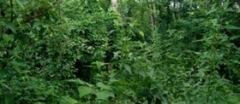 1 Acre of Land, Oojo Village Via Funaab, Alabata Road, Odeda, Ogun, Mixed-use Land for Sale
