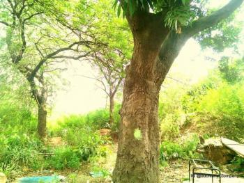 1095sqm Dry Land, Akpasima Housing Estate, 100 Metres From Police Headquarters, Uyo, Akwa Ibom, Mixed-use Land for Sale