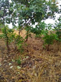 Plot of Land Life Camp, Life Camp, Kado, Abuja, Residential Land for Sale
