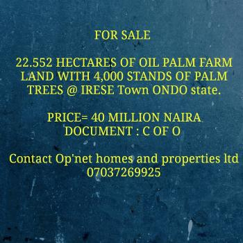 22.552 Hectares of Oil Palm Farm Land with 4,000 Stands of Palm Trees, Irese, Akure, Ondo, Commercial Land for Sale