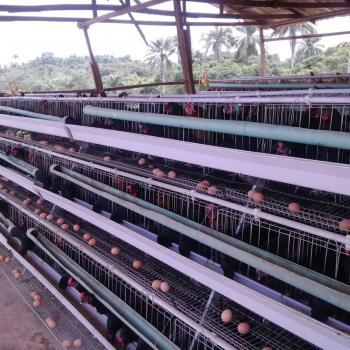 Poultry Farm, Obafe Village, Obafemi Owode, Ogun, Commercial Property for Sale