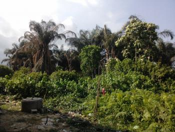 Full Plot of Land with Genuine Document, Off Abule-alfa Road, Agric, Ikorodu, Lagos, Mixed-use Land for Sale