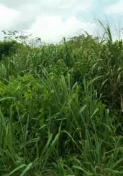 7000sqm of Land at The  Road Side, Jabi, Abuja, Commercial Land for Sale