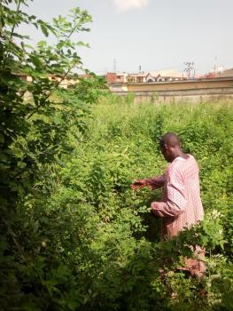 a Full Plot of Land, Off Adeola Street, Medina, Gbagada, Lagos, Residential Land for Sale