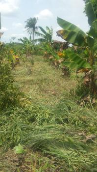 6 Acres of Plantain Farm, Ibogun, Ifo, Ogun, Land for Sale
