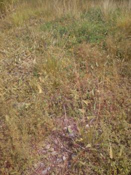 1/2 Plot Fenced Land (320squared Meter) in an Estate, Oregun, Ikeja, Lagos, Residential Land for Sale