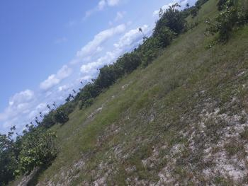 42 Plots of Land in a Strategic Location, Alatise, Ibeju Lekki, Lagos, Mixed-use Land for Sale