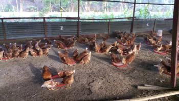 a Functional Poultry and Catfish Farm, Behind Nnpc, Mosimi Area, Along Sagamu-ikorodu Road, Sagamu, Ogun, Factory for Sale