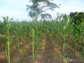 300 Hectares of Farmland, Along Keffi - Akwanga Road, Before Garaku, Keffi, Nasarawa, Commercial Land for Sale