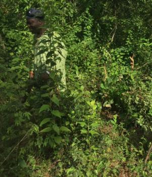 36 Acres of Farmland, Ile Oluji/okeigbo, Ondo, Commercial Property for Sale