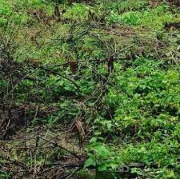 18 Plots of Dry Land, Sango Ota, Ogun, Mixed-use Land for Sale