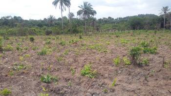 Farm Land for Sale at Itawo, Itawo, Off Ijebu-ode Epe Expressway, Ijebu Ode, Ogun, Commercial Land for Sale
