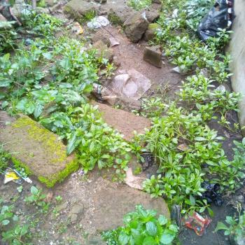 Land, Iyie-obegu Express Way, Ugwunagbo, Abia, Mixed-use Land for Sale