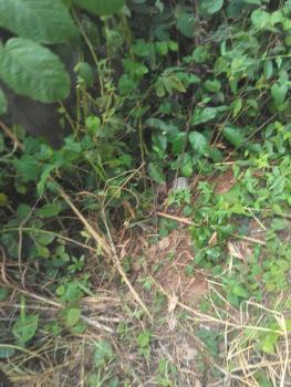 Acres of Land, Sotubo, Shagamu - Ikorodu Road, Sagamu, Ogun, Mixed-use Land for Sale