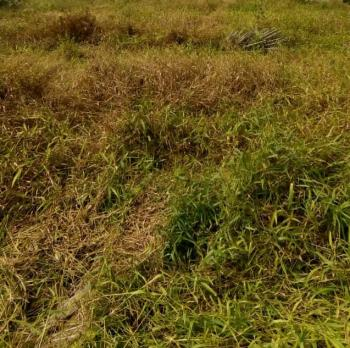 Hectares of Land, Orchid Road, Chevron, Lekki, Lagos, Land for Sale
