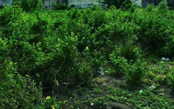 1200sqm, Off Ahmadu Bello, Victoria Island (vi), Lagos, Land for Sale