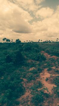 30 Plots of Land with C of O, After Trailer Park, Eleme, Rivers, Commercial Land for Sale
