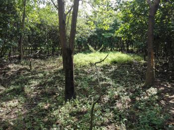 Plot of Land, Dakibiyu, Abuja, Residential Land for Sale
