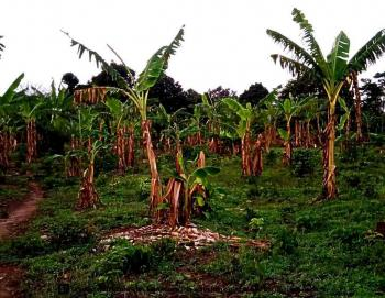 8.5 Acres of Farm at Ibadan, Oyo State., Ilalupon, Egbeda, Oyo, Commercial Land for Sale