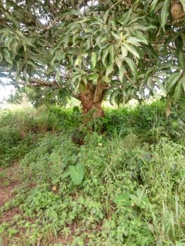 Land in Acres, Ologorin, Ilaro, Yewa South, Ogun, Mixed-use Land for Sale