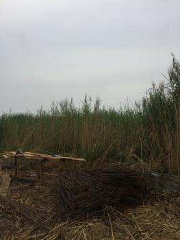 Land, Lekki Palm City, Ado, Ajah, Lagos, Residential Land for Sale
