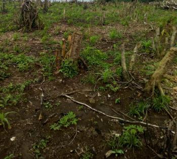 Land, Papa / Ilaro Road, Papalanto, Ewekoro, Ogun, Mixed-use Land for Sale