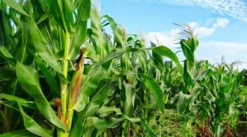 Agricultural Purposed Land, Close to The Federal University of Technology Owerri (futo), Ihiagwa, Owerri, Imo, Commercial Land for Sale