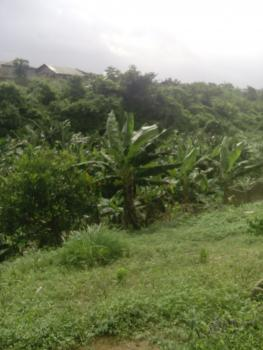 Plantain and Banana Farmland, Singer Area, Ado-odo/ota, Ogun, Commercial Land for Sale
