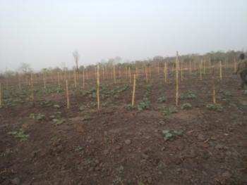 6000 Acres of Farmland, Tede Town Off Shaki Iseyin Express Way, Atisbo, Oyo, Commercial Land for Rent