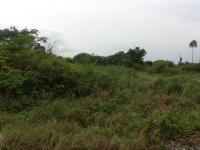 10 Acres At Lipeji Village Virgin Land For Sale, Obafemi Owode, Ogun, Land For Sale