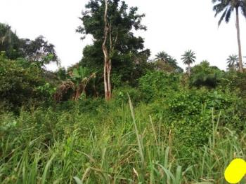 Acres of Land  with Palm Trees, Iwo/ibadan, Lagun Area, Egbeda, Oyo, Industrial Land for Sale