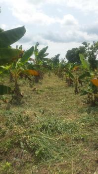 Agricultural Land at an Affordable Price, Ibogun, Olambe, Ifo, Ogun, Commercial Land for Sale