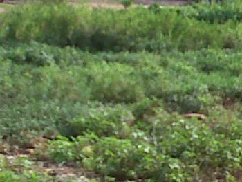 Fenced and Dry Plot of Land, Ajao Estate, Isolo, Lagos, Mixed-use Land for Sale