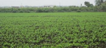 6527 M2 of Land at Apo Legislation Quaters, Close to Apo Legislative Quarters Area, Apo, Abuja, Commercial Property for Sale
