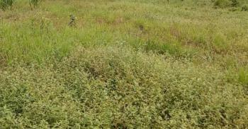 2 Plots of Land, By Okeowo Estate, Simawa, Ogun, Residential Land for Sale