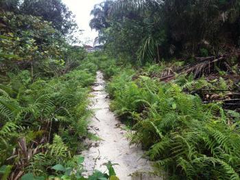 Over Thirty  Plots of Land., Cele Imedu, Olori Elegushi., Awoyaya, Ibeju Lekki, Lagos, Mixed-use Land for Sale