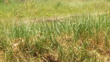 Land for, Phase 2, Osborne, Ikoyi, Lagos, Mixed-use Land for Sale