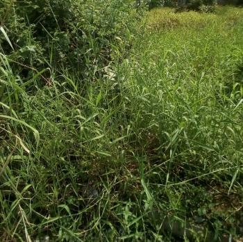 Land of 1700sqm, Trumbull Road, Old Ikoyi, Ikoyi, Lagos, Commercial Land for Sale