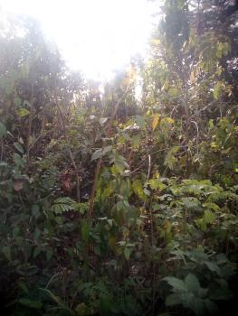 Plot of Land, Avu/obosima Road, New Owerri, Owerri, Imo, Commercial Land for Sale