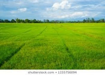 Maasive 50 Hectare of Agricultural Land, Off Karu-karshi Expressway, Karu, Nasarawa, Mixed-use Land for Sale
