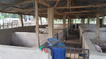 a Functional Piggery/farm with Structured Payment, Onidundu, Towards Iware, Akinyele Local Government, Moniya, Ibadan, Oyo, Tank Farm for Sale