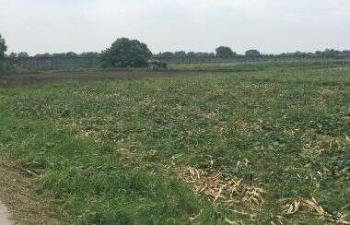 21 Hectares of Land, Gwarinpa, Abuja, Land for Sale