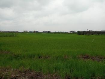 1600sqm Distress Sale Land with Global C of O in Ikate Eleghushi Up for Grab...., Off Kusenla, Ikate Elegushi, Lekki, Lagos, Residential Land for Sale